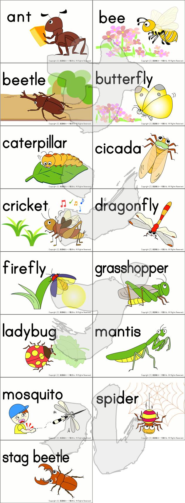 昆虫カード15種